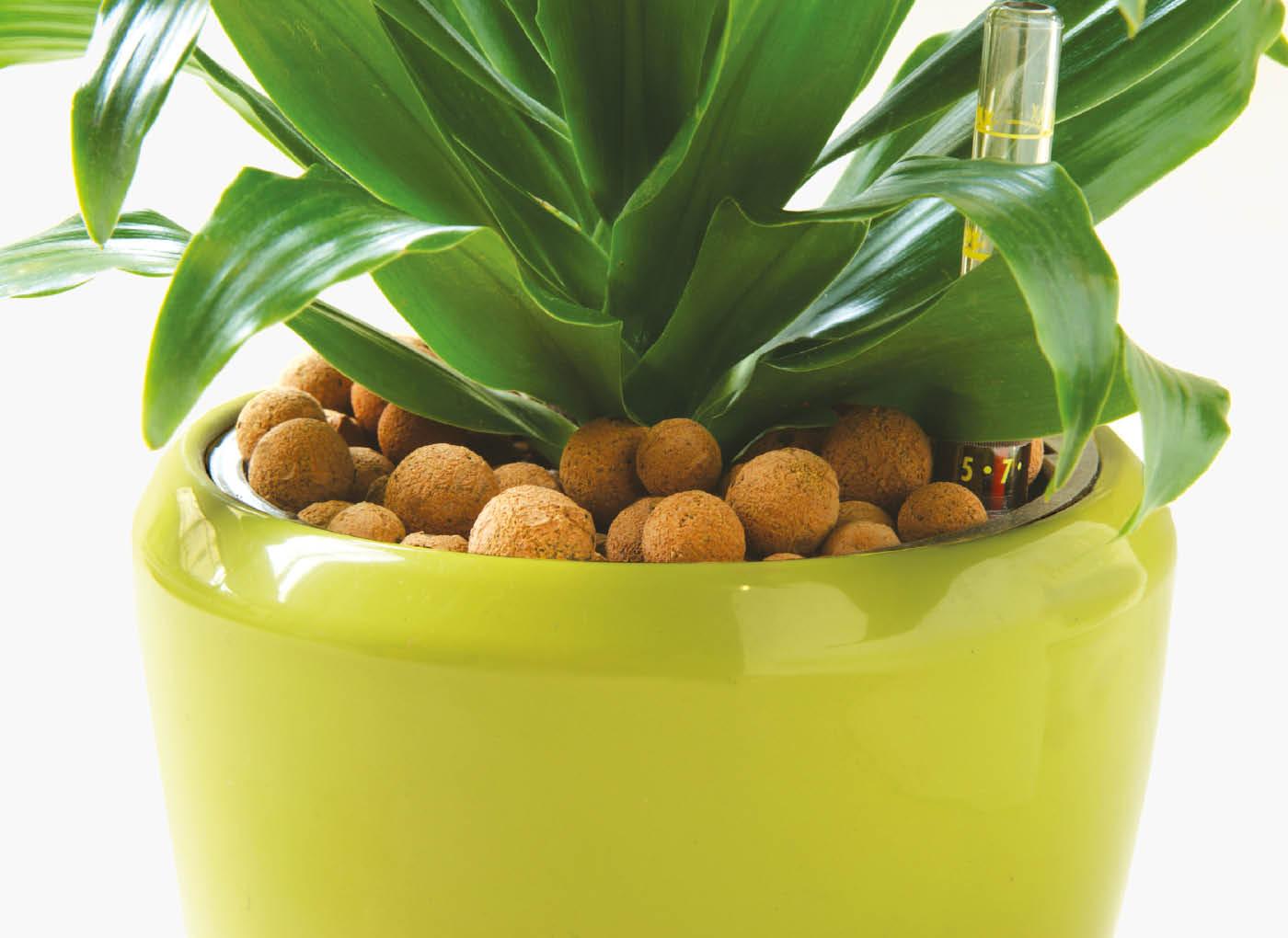 agrilaterlite-piante-vaso-P44-4