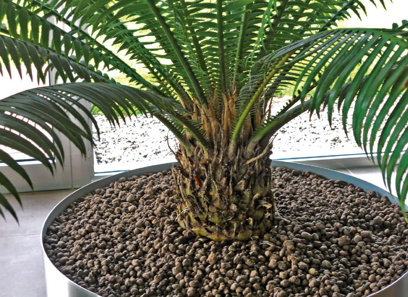 argilla-espansa-piante-vaso-agrileca-P43-9