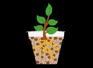 coltivazioni-in-vaso-lecagreen-P45