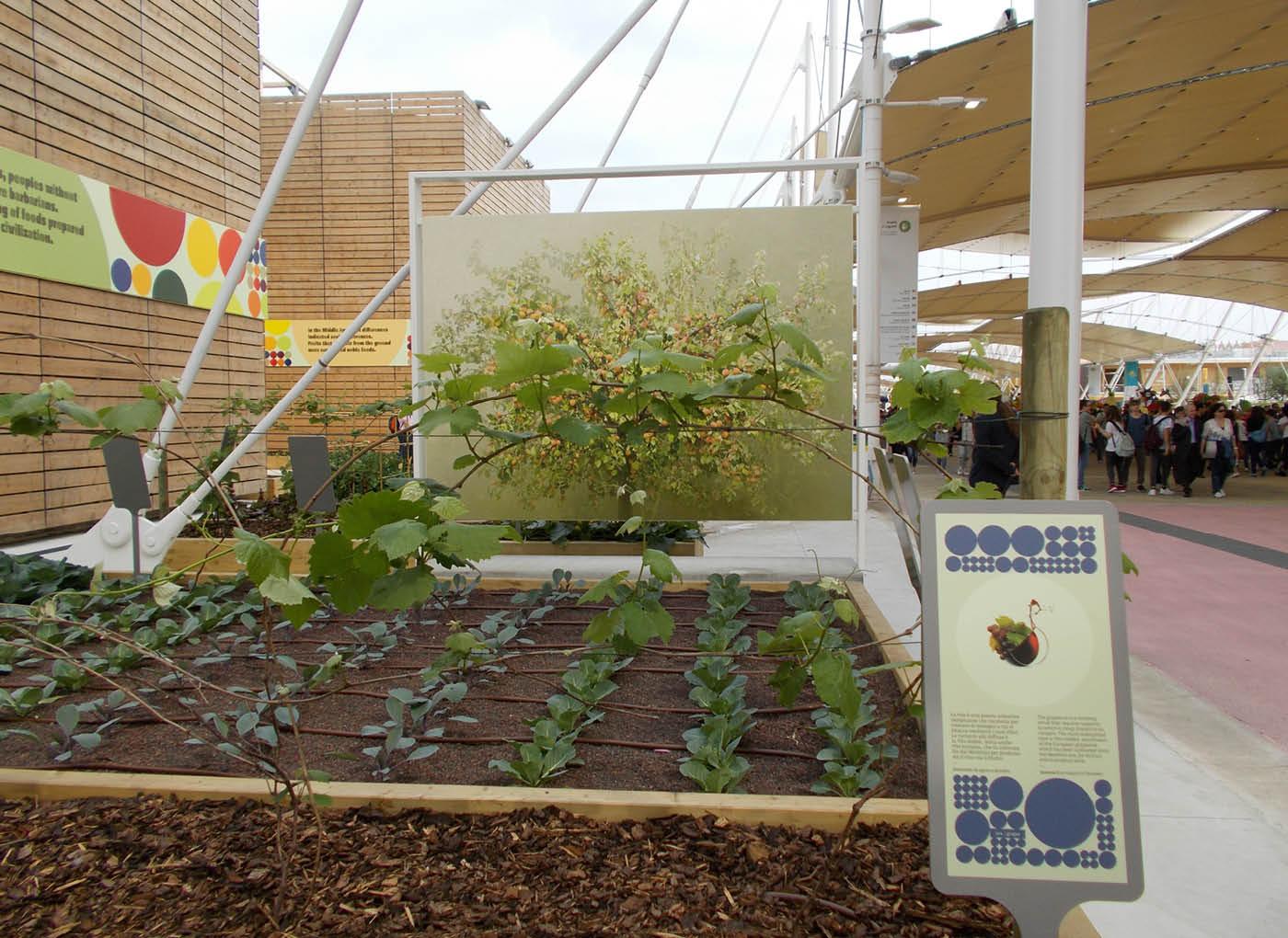 expo-2015-cluster-spezie-verde-leca-