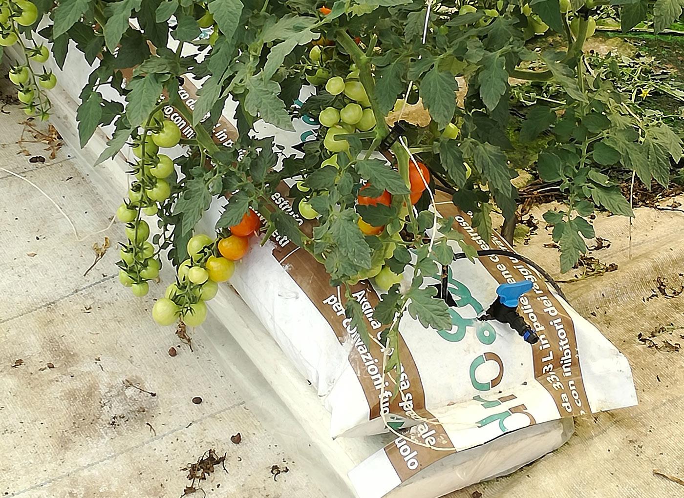 idroleca-coltivazioni-fuori-suolo-P46-4