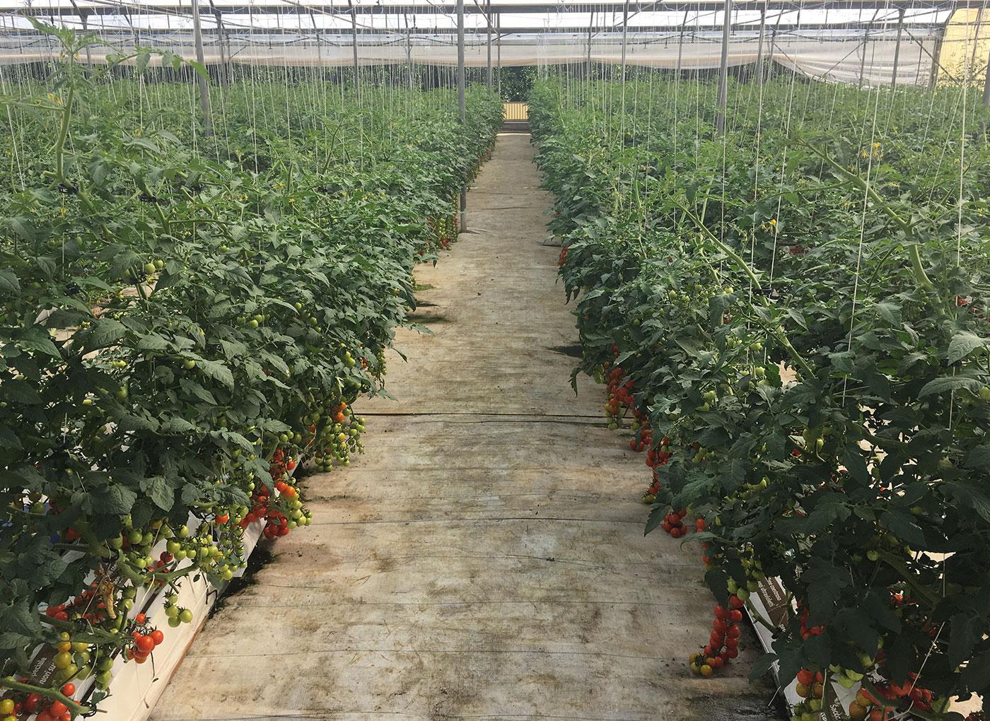 idroleca-coltivazioni-fuori-suolo-P46-5