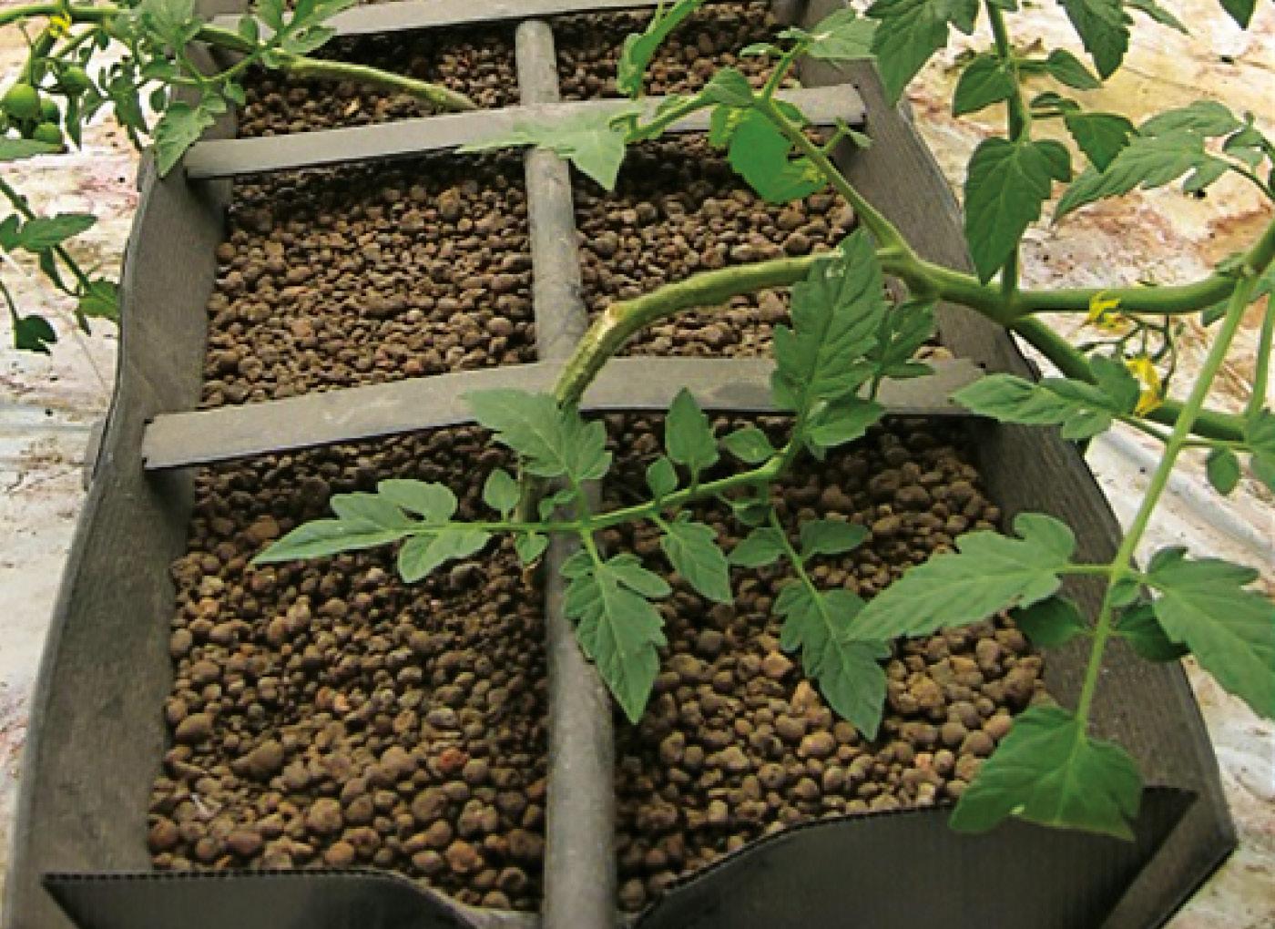 idroleca-coltivazioni-fuori-suolo-P46-8