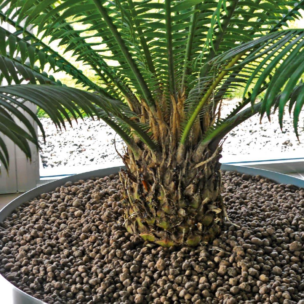 Vivaismo e piante in vaso