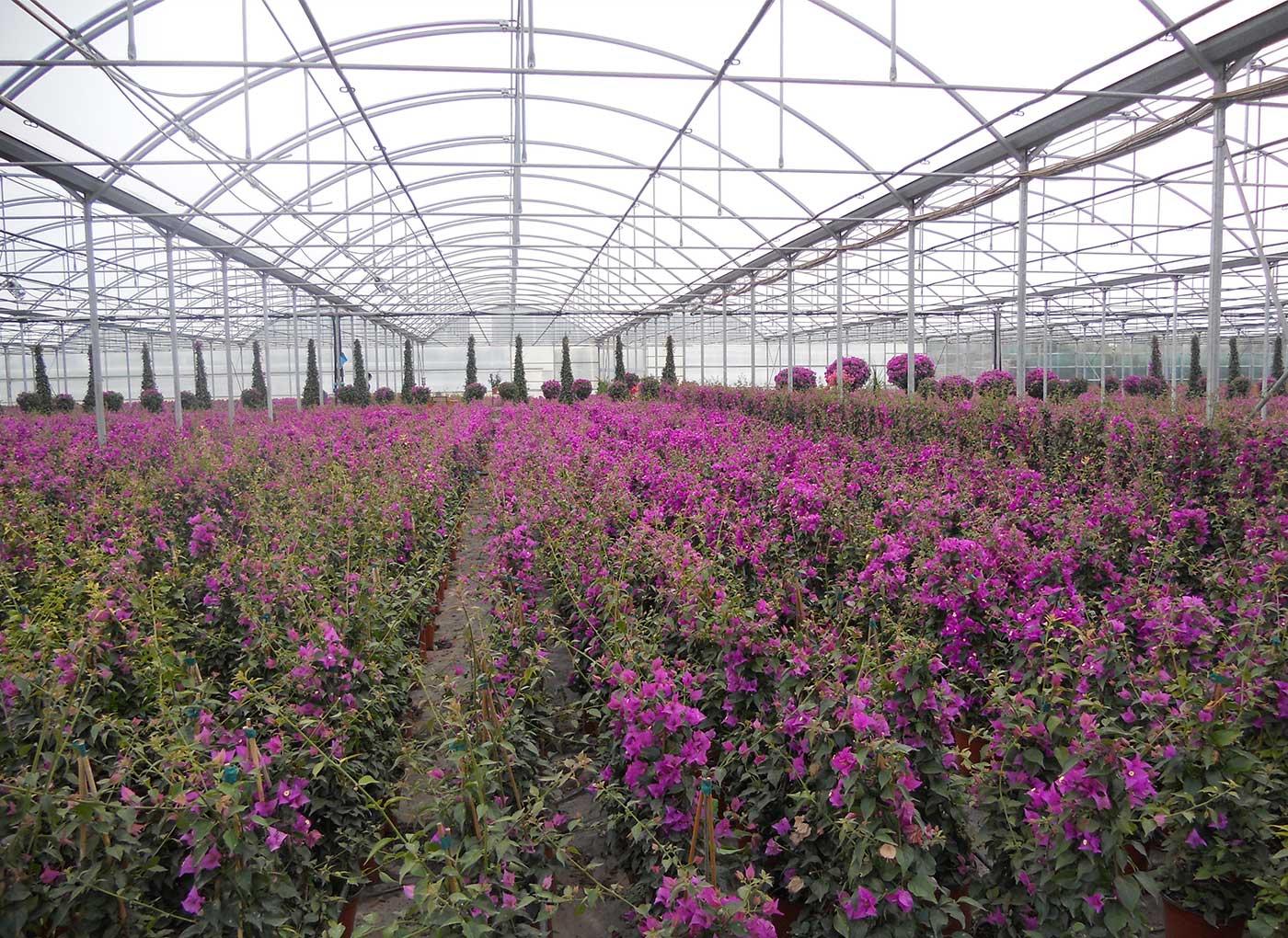 vivaismo-piante-in-vaso-AV4-3